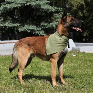 Косынка охлаждающая для собак Osso Fashion XL