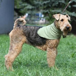 Охлаждающая косынка для собак Osso Fashion L
