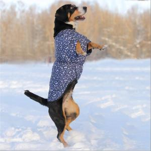 Жилет для собак Osso Fashion, размер 55