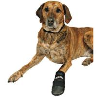 Фотография товара Обувь для собак Trixie Walker XL, черный