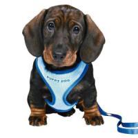 Фотография товара Шлейка для щенков Trixie, синий