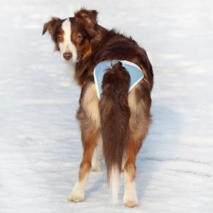 Трусы для собак Osso Fashion Absorb XL