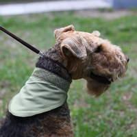 Охлаждающие средства для собак